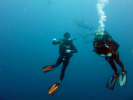 Our VIP Diver - Paul Russell
